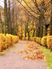 Уборка территории, листьев